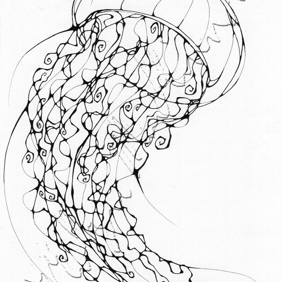 jelly fish drawings simple jellyfish drawing at getdrawingscom free for fish drawings jelly