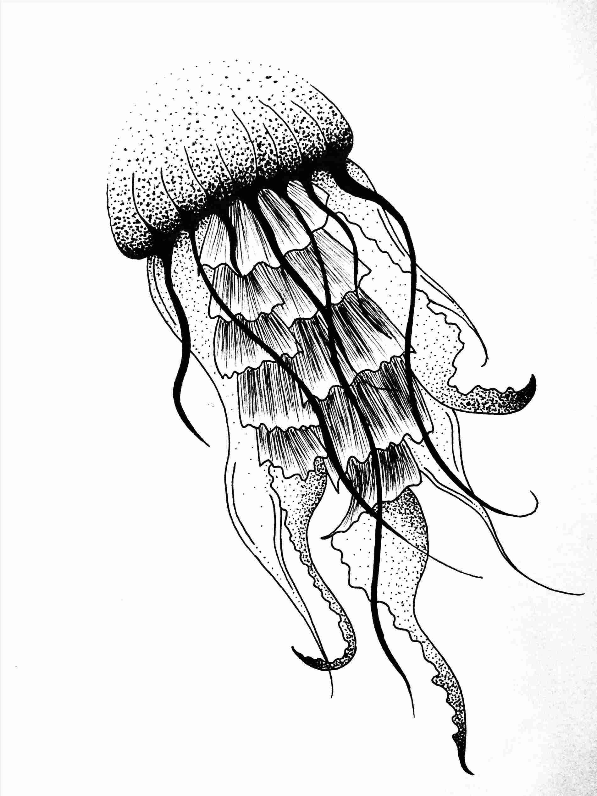 Jelly fish sketch