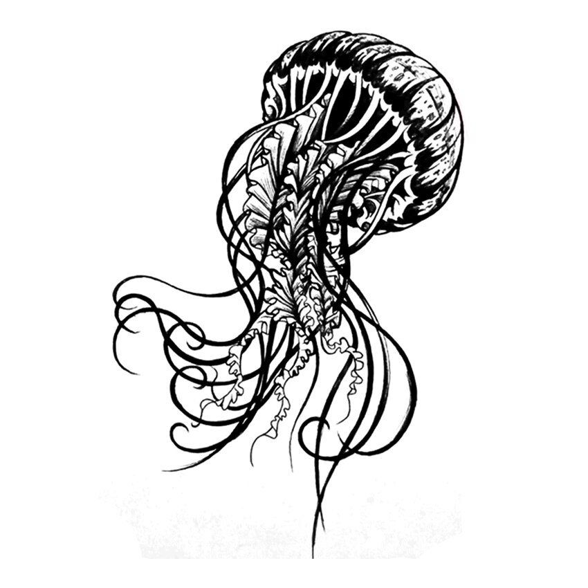jelly fish sketch hand drawn jellyfish set sea collection stock illustration jelly sketch fish