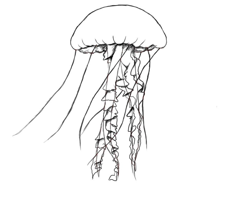 jelly fish sketch how to draw a jellyfish drawingforallnet jelly fish sketch