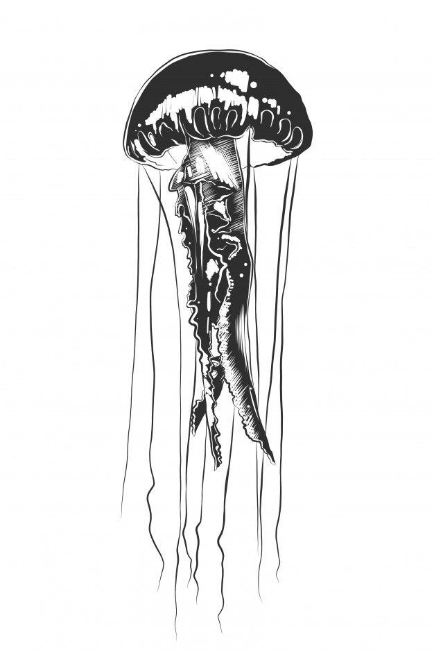 jelly fish sketch realistic jellyfish drawing at paintingvalleycom fish jelly sketch