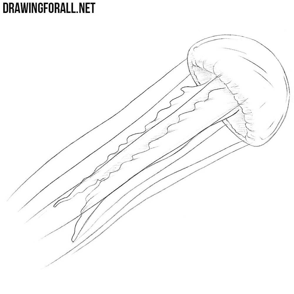 jelly fish sketch simple jellyfish drawing at getdrawings free download fish sketch jelly