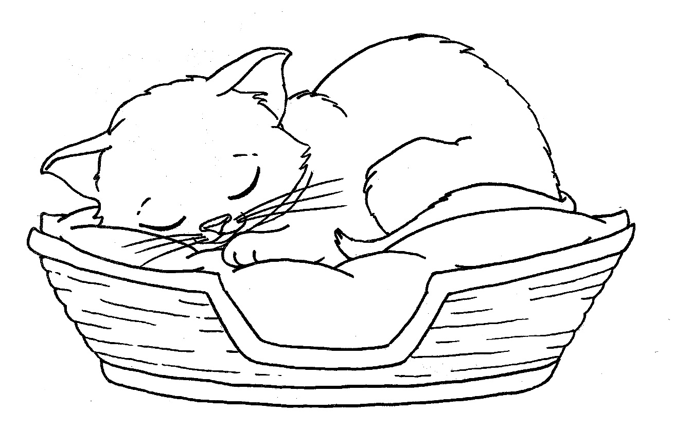 kitten color page kitten coloring pages best coloring pages for kids page kitten color