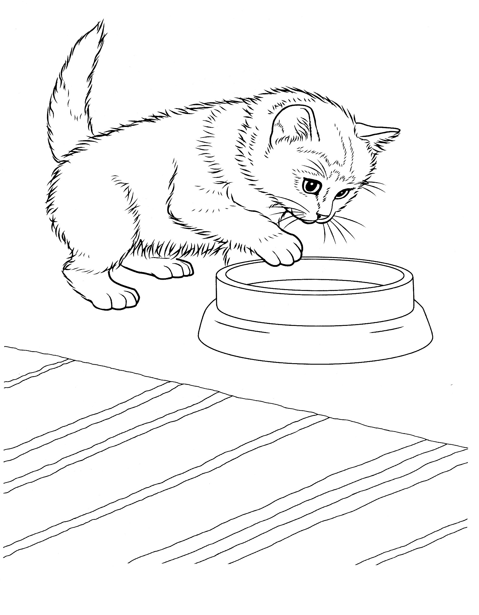 kitten color page puppy and kitten coloring page coloring home color page kitten