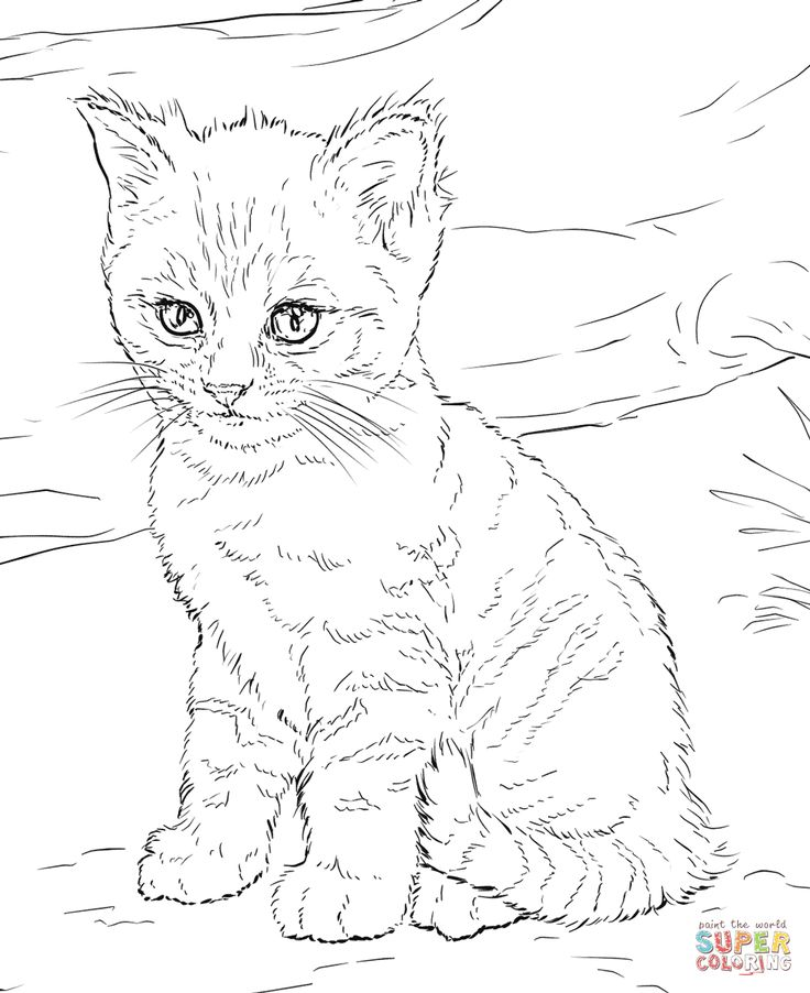 kitty cat printable coloring pages cute cat coloring pages fresh 20 unique coloring pages coloring cat printable kitty pages