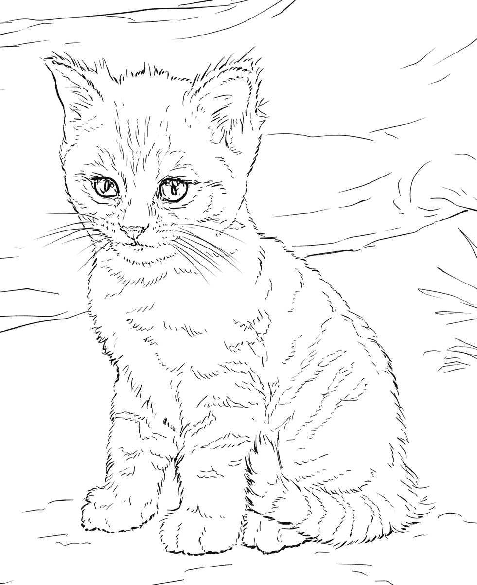 kitty pictures to color get this baby kitten coloring pages 84624 kitty color pictures to