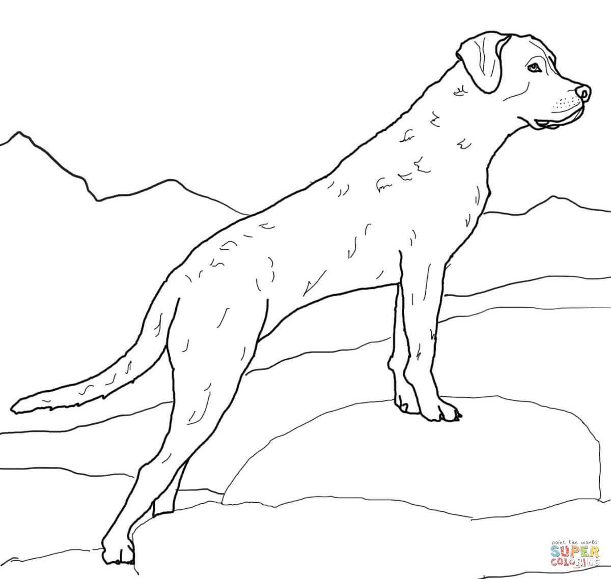 labrador colouring pages best dog black labrador coloring page free dog coloring pages labrador colouring