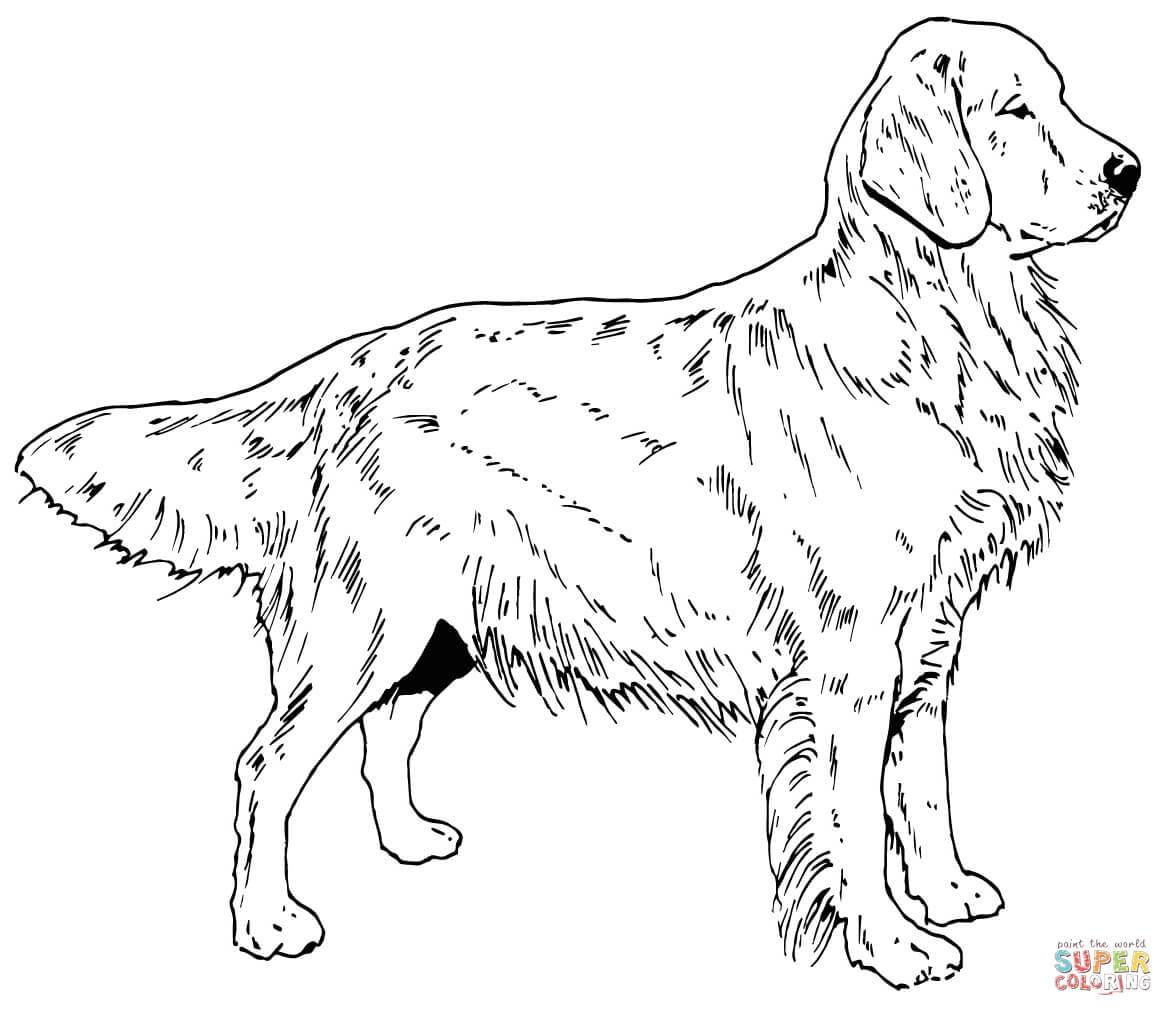 labrador colouring pages chocolate lab drawing at getdrawings labrador retriever colouring pages labrador