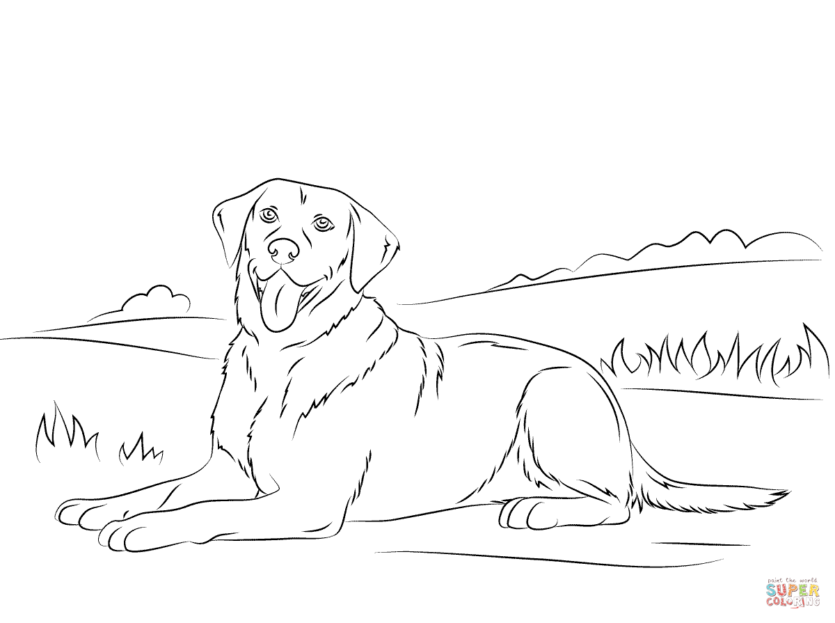 labrador colouring pages golden lab puppy sheet coloring pages pages colouring labrador