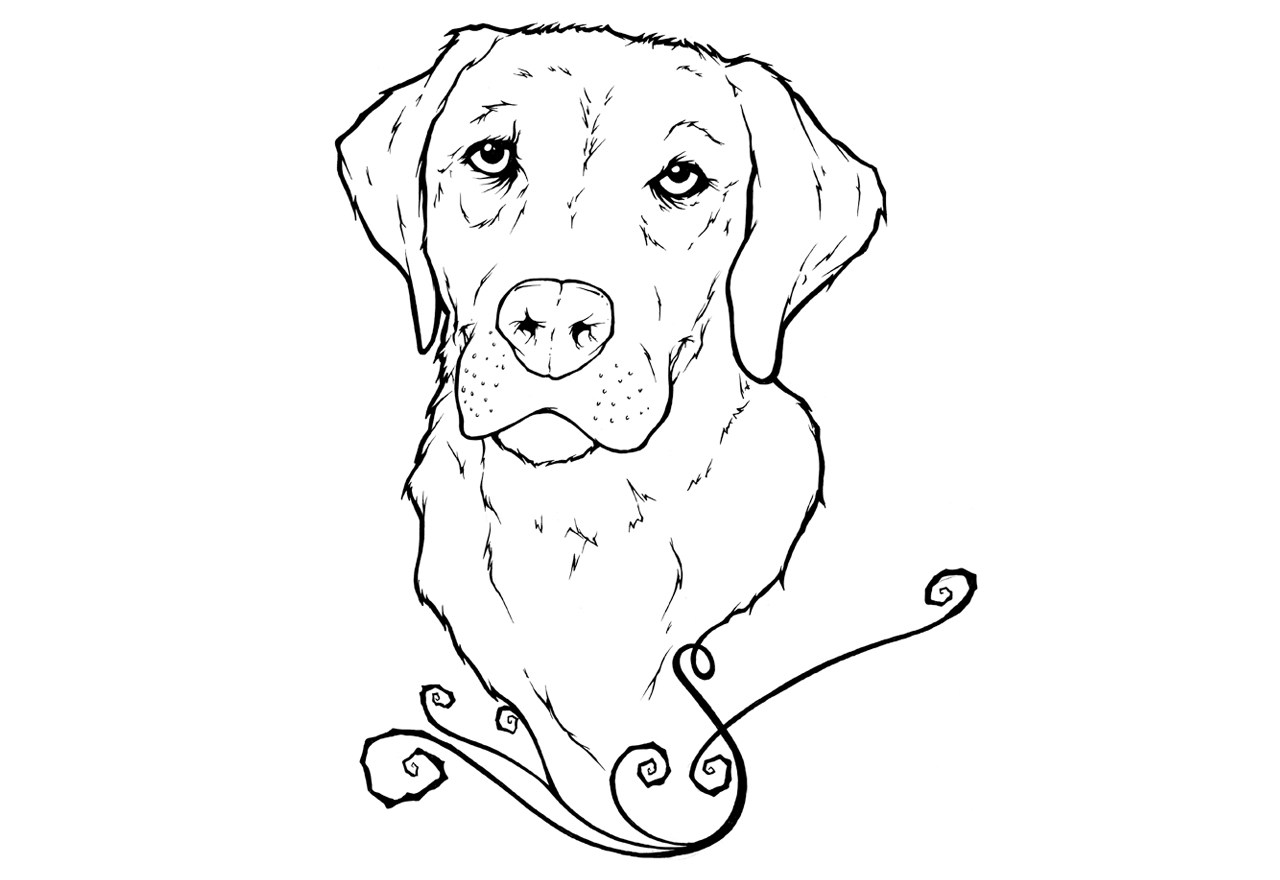 Labrador colouring pages