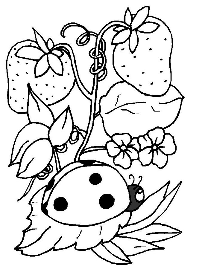 lady bug coloring pages ladybug coloring pages to download and print for free coloring lady bug pages