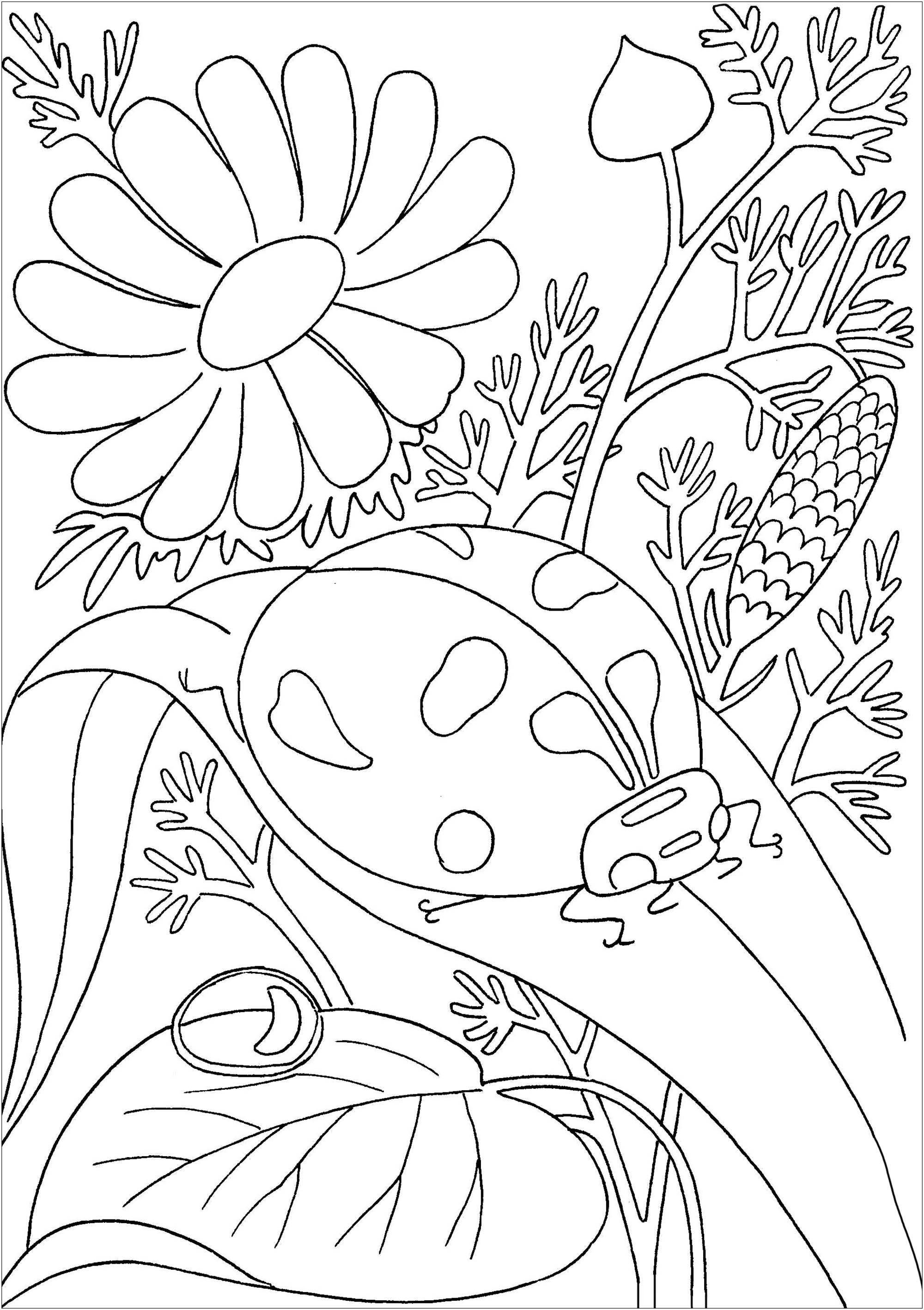 lady bug coloring pages ladybug on a leave butterflies insects adult coloring lady coloring pages bug