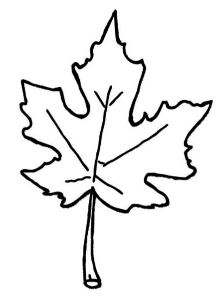 leaf clipart coloring autumn leaves coloring pages free images at clkercom coloring clipart leaf