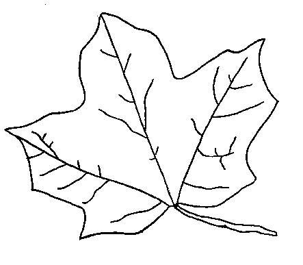 leaf clipart coloring birch leaf clipart 20 free cliparts download images on clipart leaf coloring