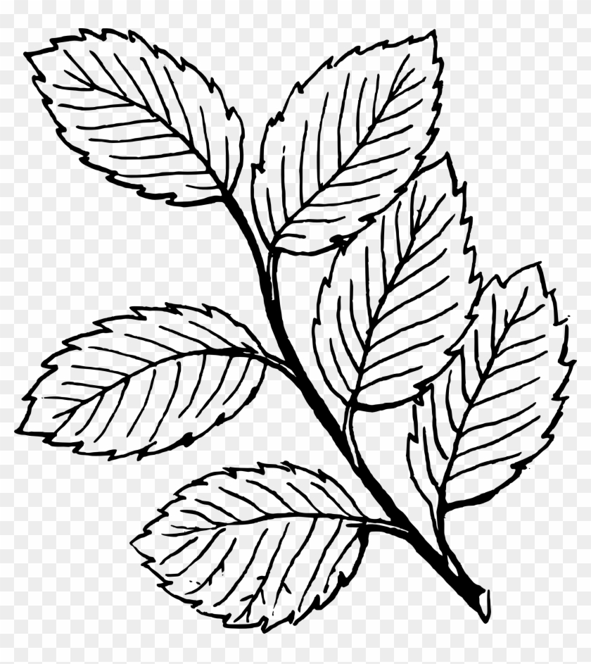 leaf clipart coloring fall black and white fall leaf clipart black and white coloring clipart leaf