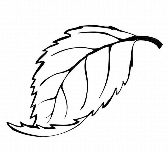leaf clipart coloring mint leaf drawing free download on clipartmag clipart leaf coloring