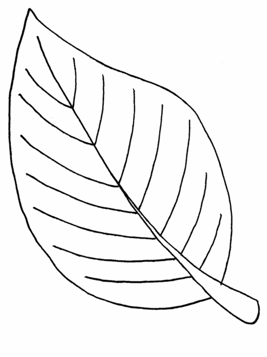 leaf clipart coloring tree with leaves illustration black white clip art clipart coloring leaf