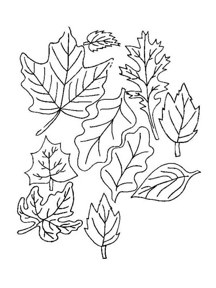leaf coloring pages leaves coloring pages download and print leaves coloring pages leaf coloring