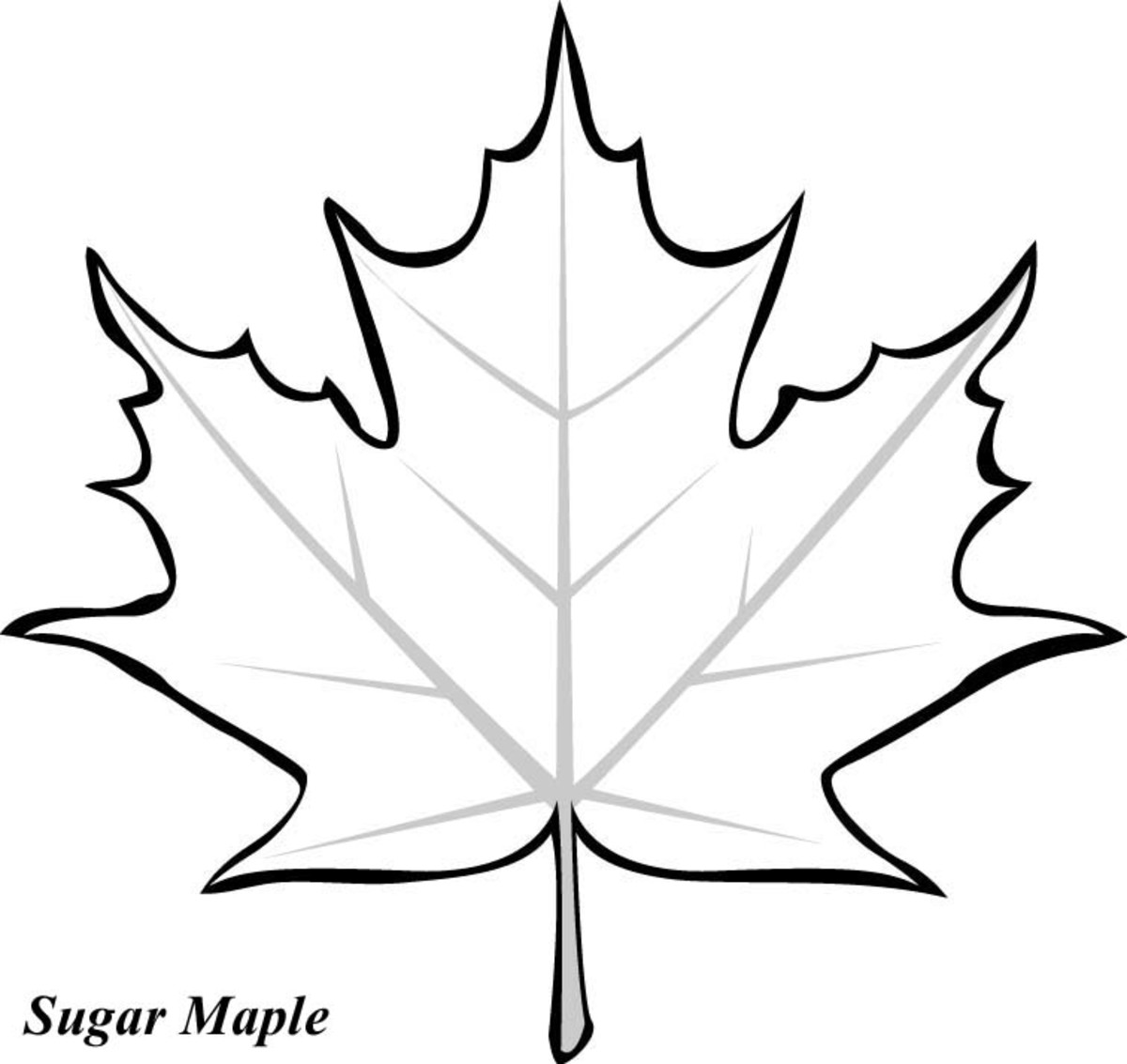 leaf coloring pages some leaf nature coloring page for kids printable free pages leaf coloring
