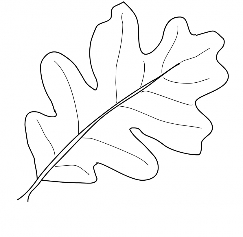 leaf for coloring 20 free printable fall leaves coloring pages coloring leaf for