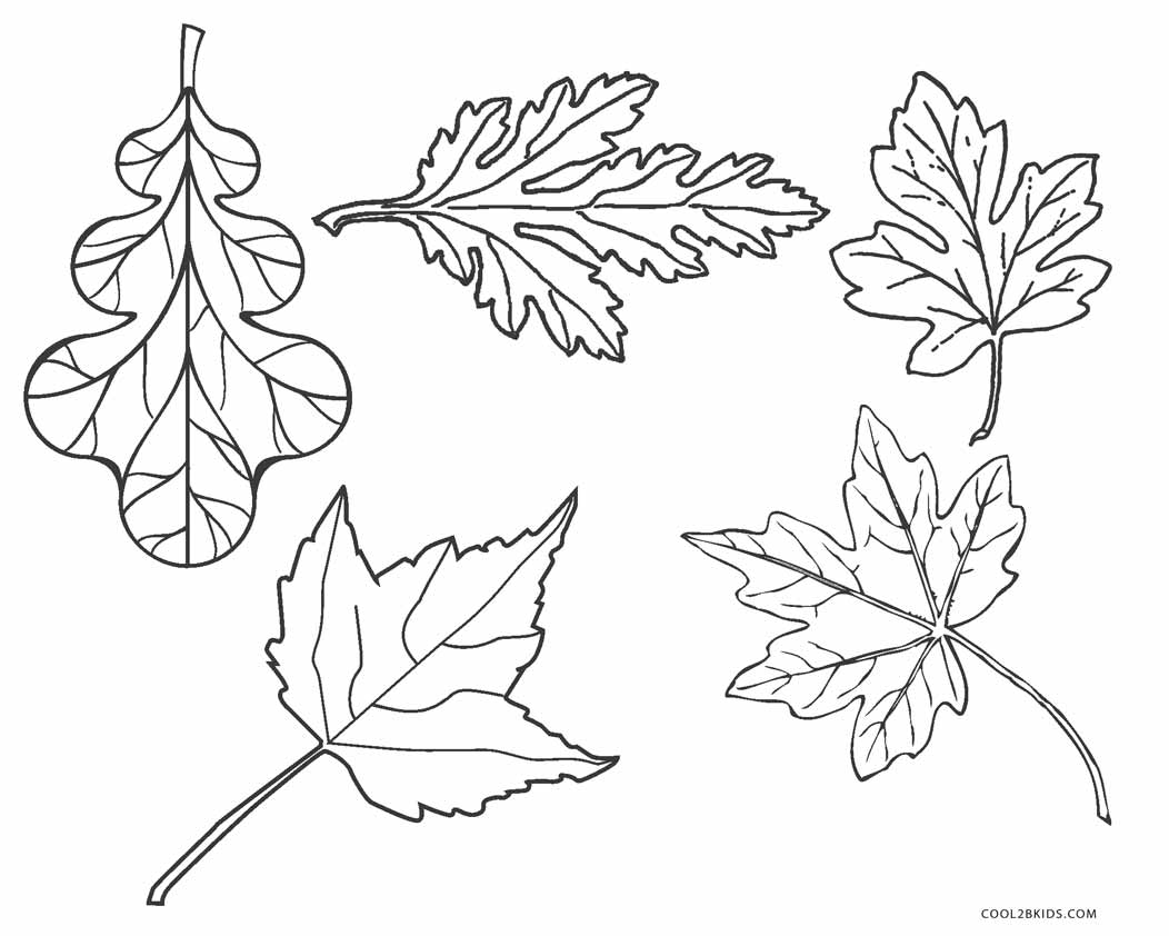 leaf for coloring free printable leaf coloring pages for kids leaf for coloring