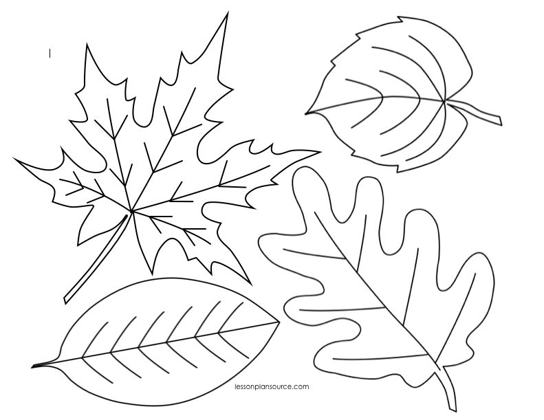 leaf for coloring leaf coloring pages for preschool at getcoloringscom for coloring leaf