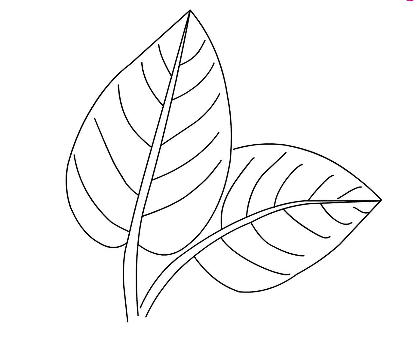 leaf for coloring leaves coloring page part 2 crafts and worksheets for for coloring leaf