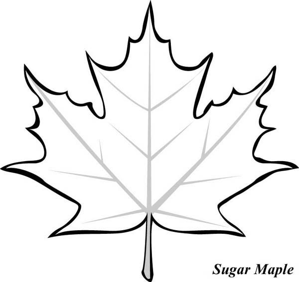 leaf for coloring maple leaves coloring pages clipart panda free clipart leaf for coloring