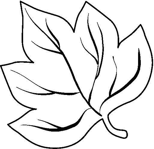 leaf for coloring maple tree branch with maple leaf coloring page kids coloring leaf for