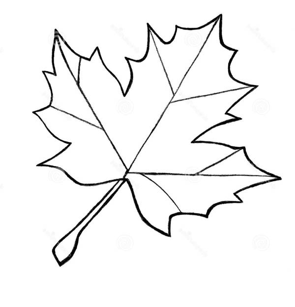 leaf for coloring set six maple leaves template coloring page leaf for coloring