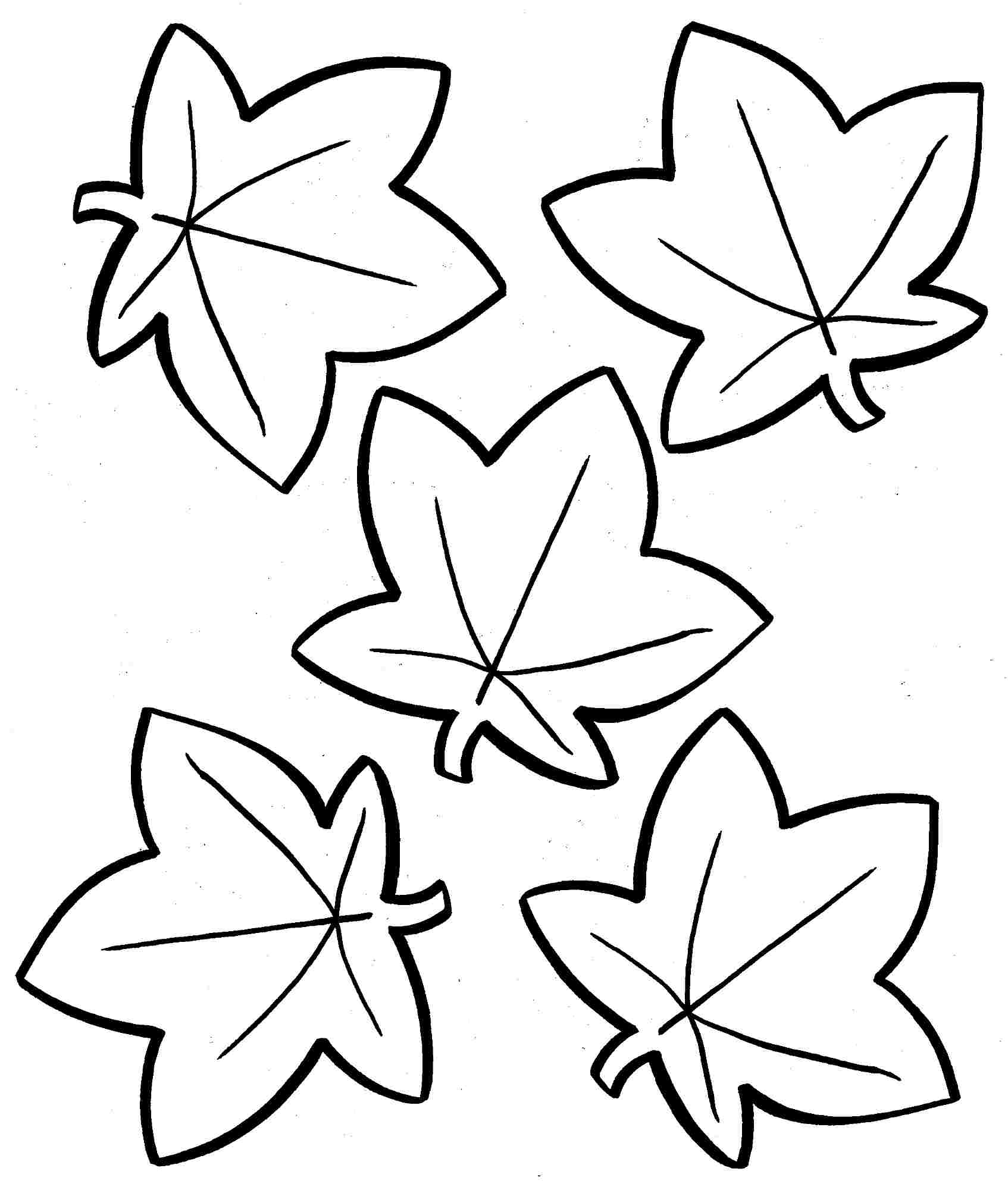 leaf for coloring three maple leaves template coloring page leaf for coloring