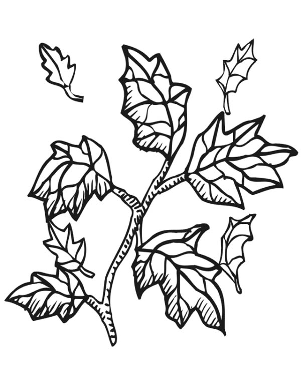 leaf for coloring tree leaves coloring pages for kids to print for free coloring for leaf