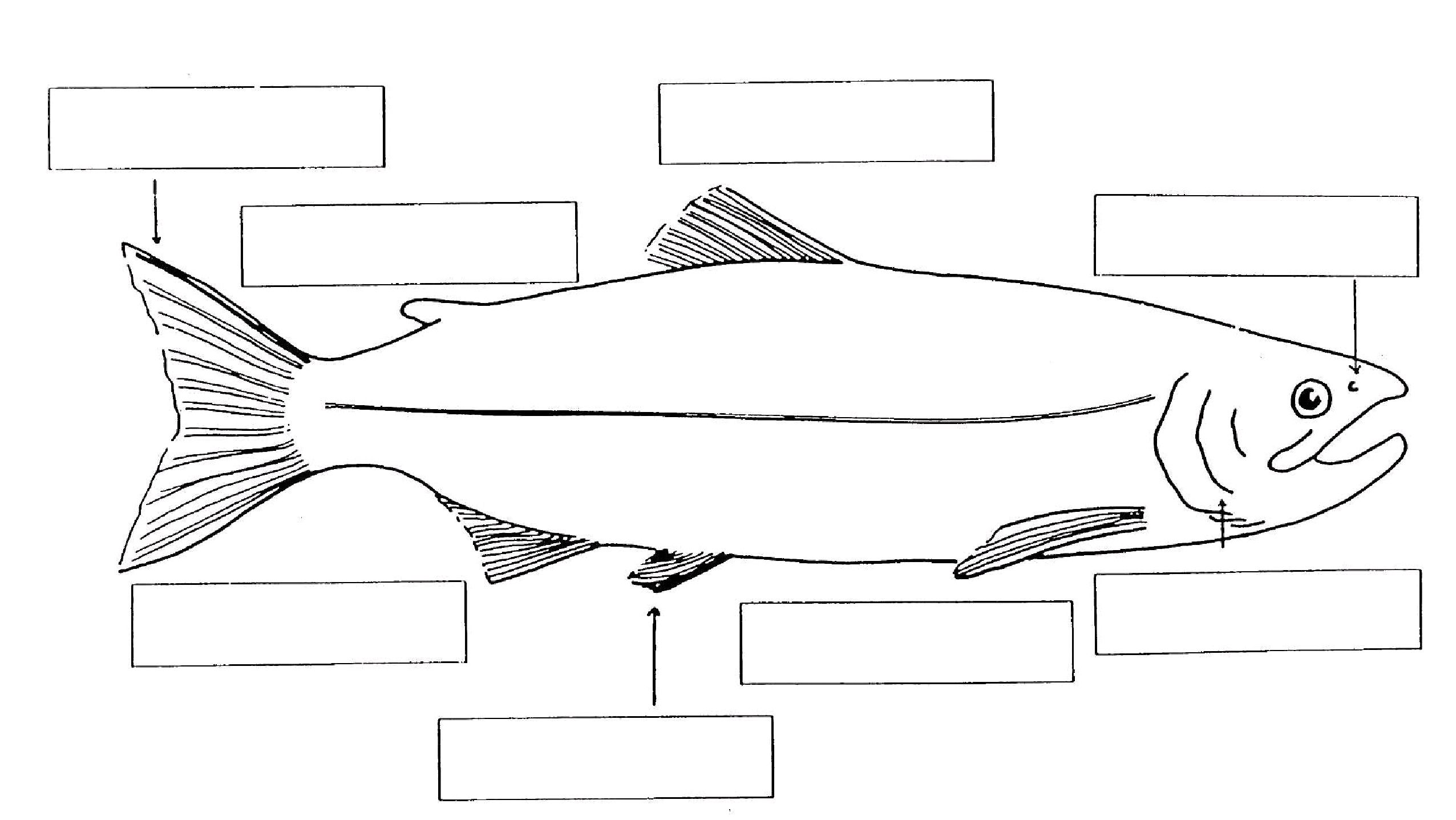 life cycle of fish worksheet fish life cycle by the learning beezzz teachers pay teachers life of worksheet fish cycle