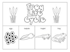 life cycle of fish worksheet frog feet pattern use the printable outline for crafts cycle fish life worksheet of