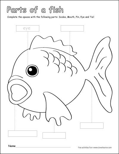 life cycle of fish worksheet pin by yamilette janer on clase demostrativa 1 of life fish worksheet cycle
