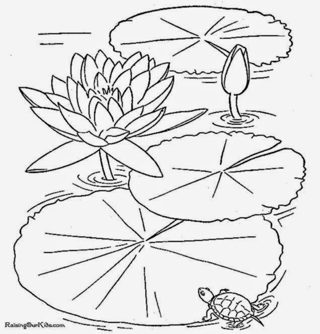 lily pad flower coloring pages lily pad flower coloring pages coloring home flower lily pages pad coloring