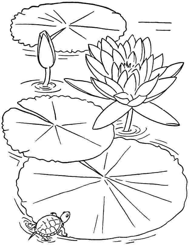 lily pad flower coloring pages lily pad flower coloring pages coloring home pad flower pages lily coloring