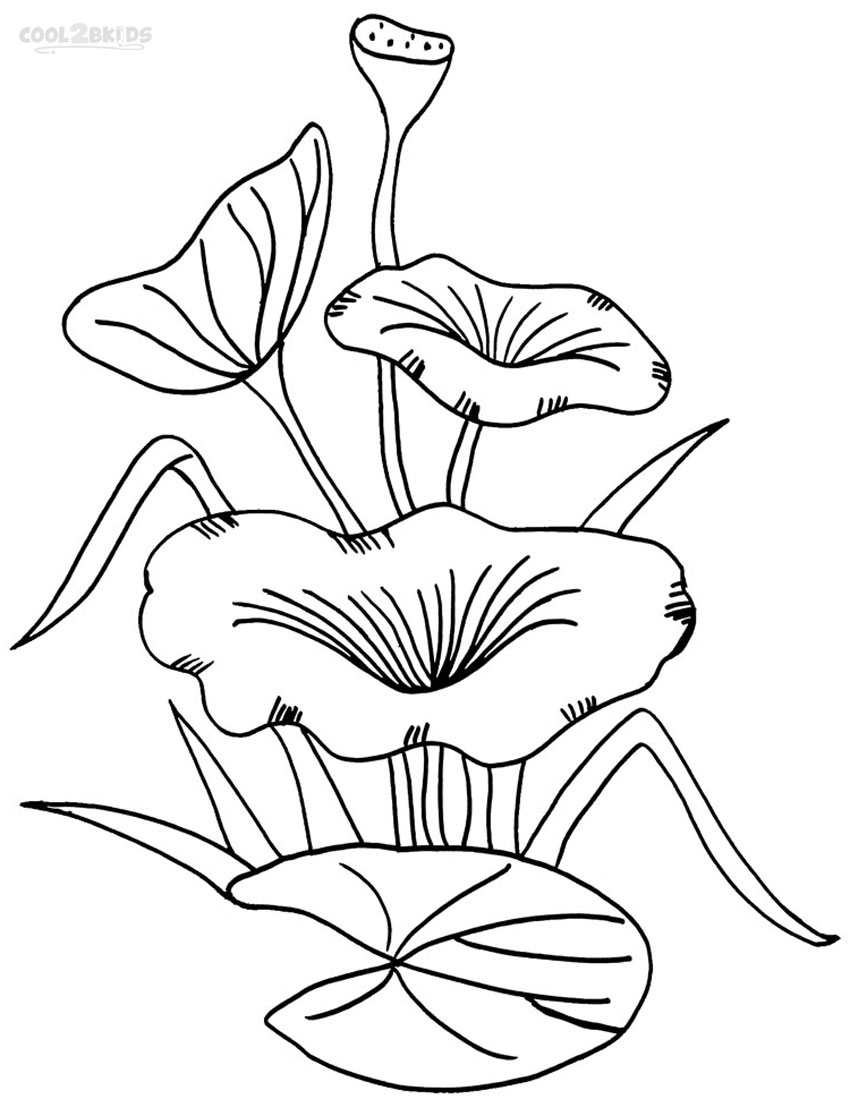 lily pad flower coloring pages lily pad flower coloring pages coloring home pages flower coloring pad lily