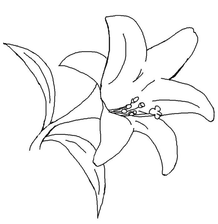 lily pad flower coloring pages lily pad flower coloring pages coloringsnet lily flower pages coloring pad