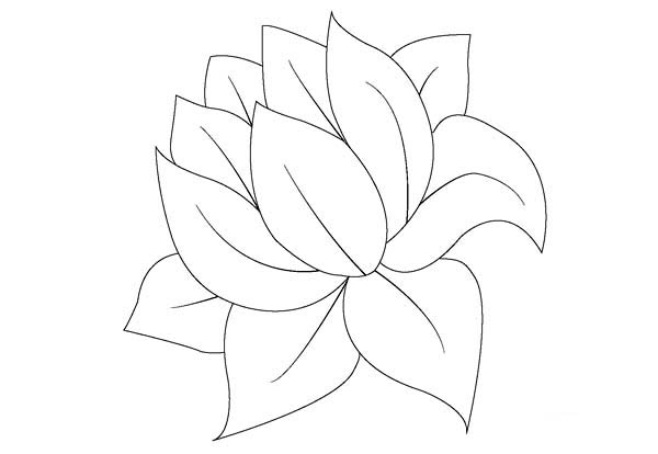 lily pad flower coloring pages printable lily pad coloring pages for kids cool2bkids flower coloring pages lily pad