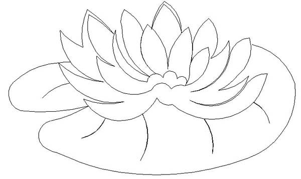 lily pad flower coloring pages printable lily pad coloring pages for kids cool2bkids pages flower coloring lily pad