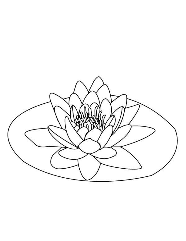 lily pad flower coloring pages water lily over lily pad coloring page color luna pages pad coloring lily flower