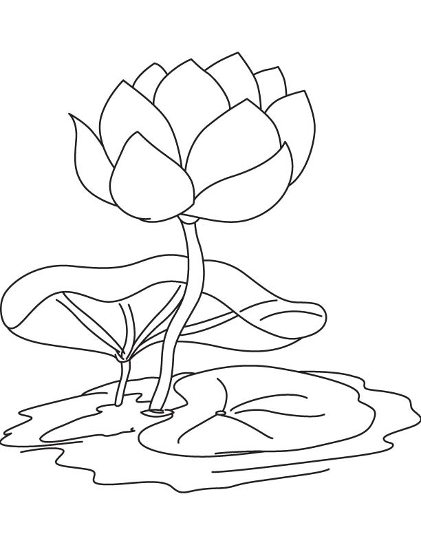 lily pad flower coloring pages water lily pad coloring page water lily pad coloring page pad lily pages flower coloring