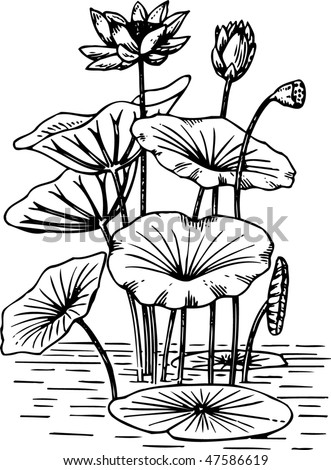 lily pads drawing a watery world kids environment kids health national drawing pads lily