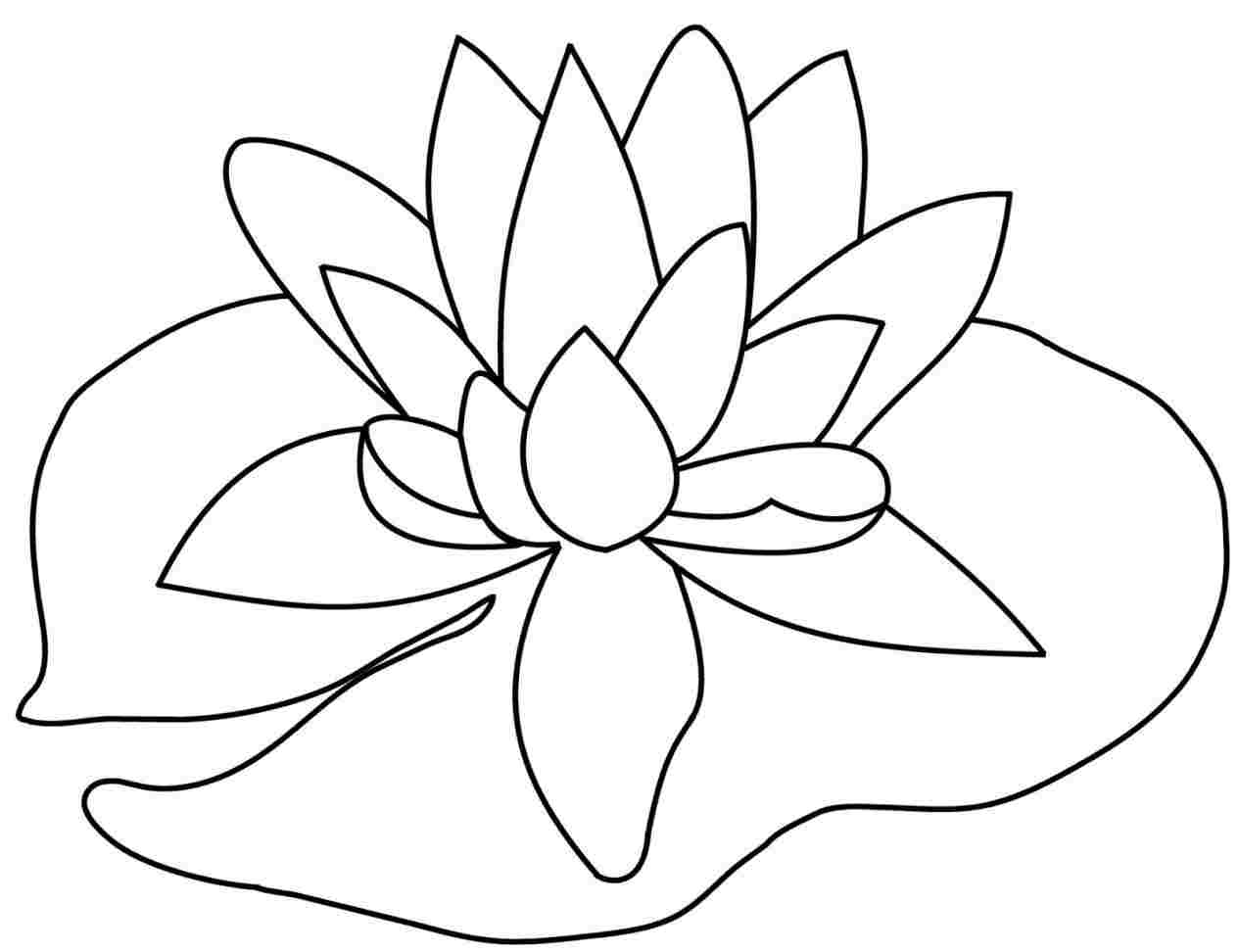 Lily pads drawing
