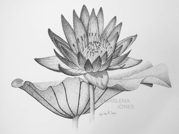 lily pads drawing frog on lily pad drawing at getdrawings free download pads lily drawing