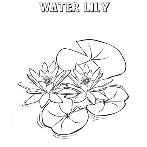 lily pads drawing how to draw a lily pad lilies drawing water lily drawing lily pads