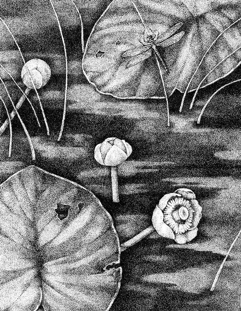 lily pads drawing how to draw a lily pad step by step flowers pop culture drawing lily pads