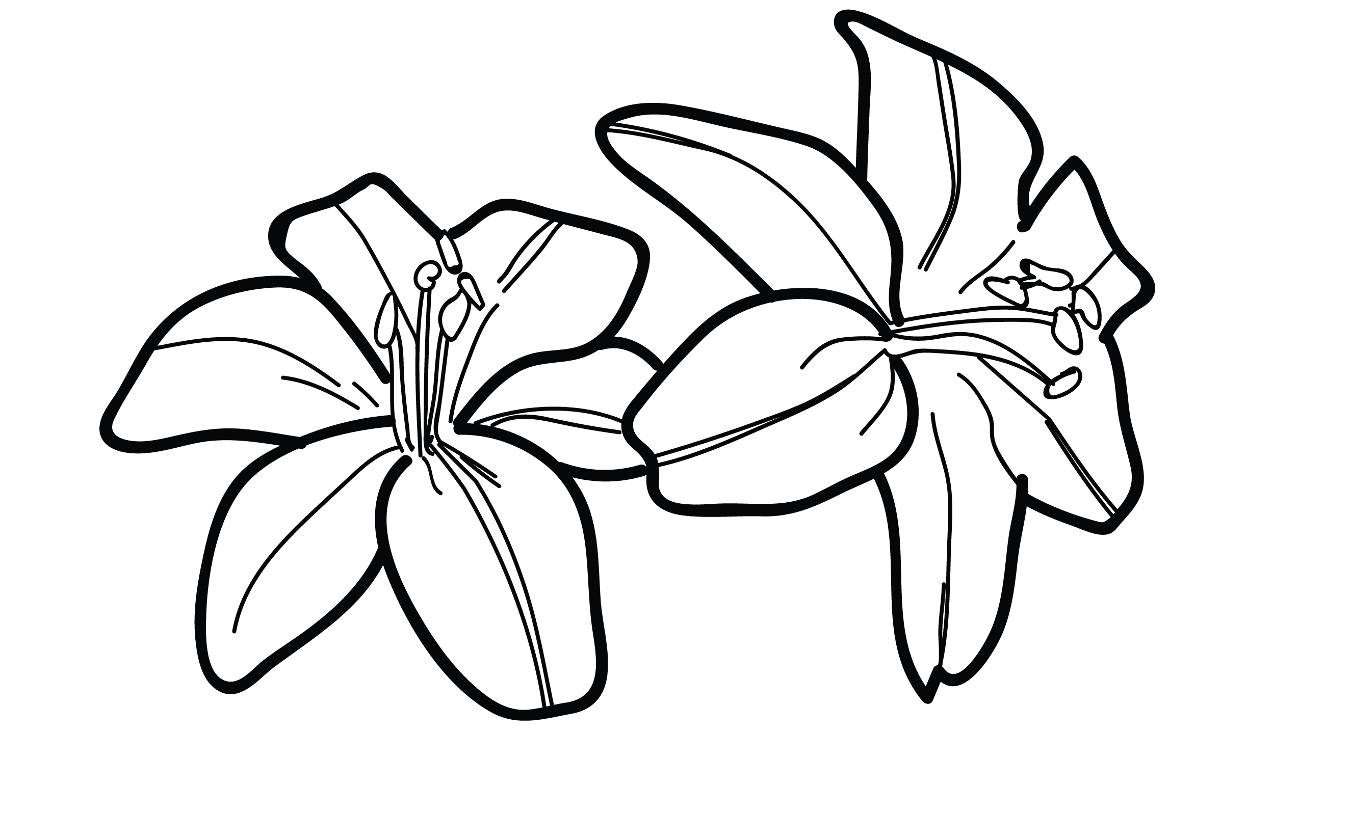 lily pads drawing lily pad flower drawing at getdrawings free download drawing lily pads