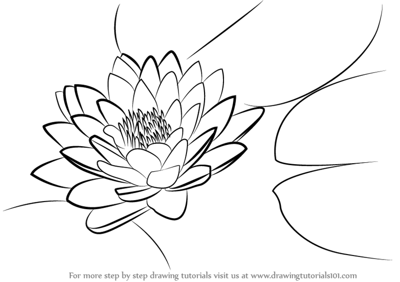 lily pads drawing lily pad flower drawing at getdrawings free download drawing pads lily